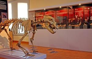 museo xeolóxico