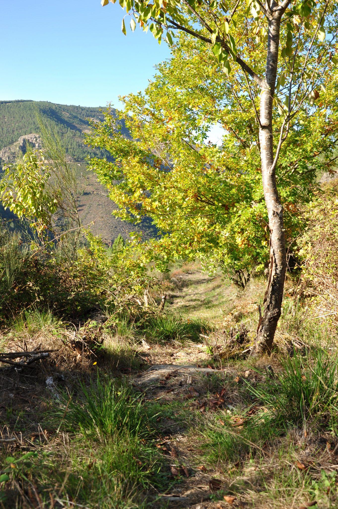 Plegamiento Geológico de Campodola